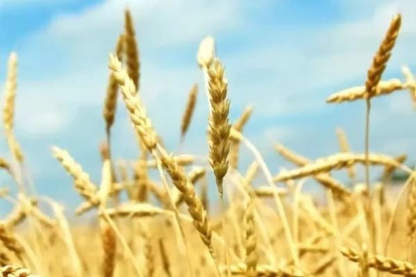 Финансирование воронежской  аграрной отрасли увеличивается с каждым годом