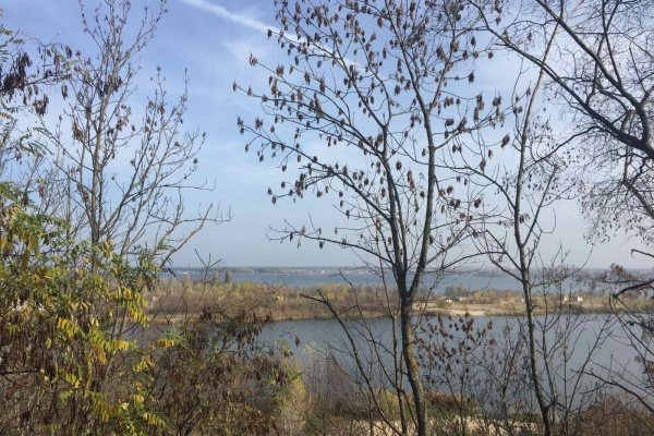 Подрядчик затянул сроки установления границ зеленого пояса вокруг Воронежа
