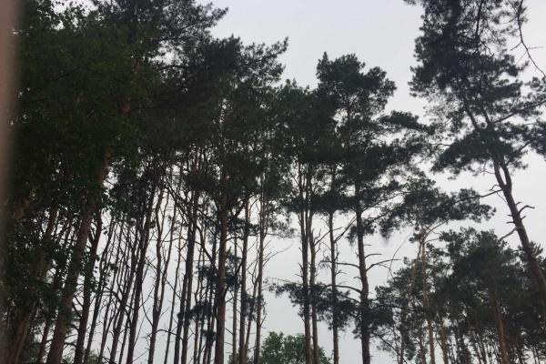 Северный лес в Воронеже должны благоустроить до 2023 года