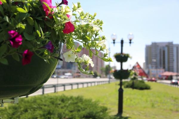 Воронежские клумбы обновили после критики мэра