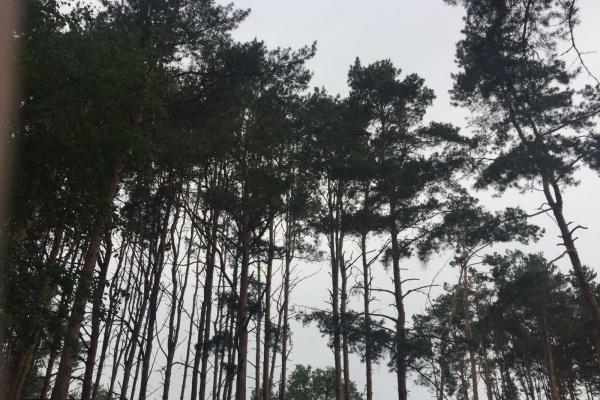 Проект благоустройства Северного леса в Воронеже разработают за 8,2 млн рублей