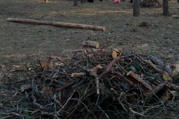 Леса под Воронежем вырубят под коттеджный посёлок