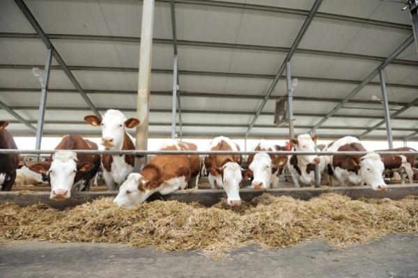 Воронежский опыт поможет ликвидировать дефицит молока-сырья в России