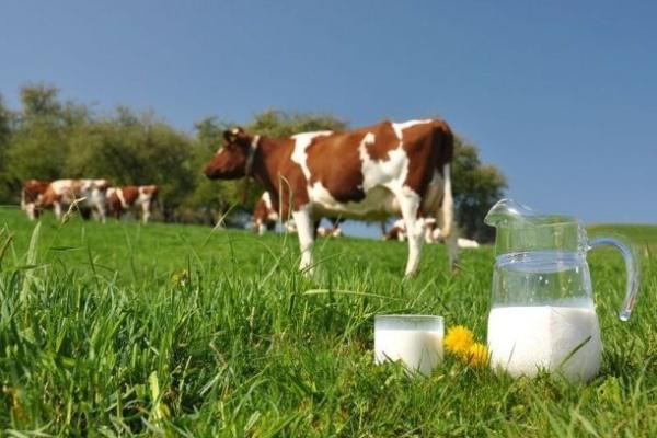 За качеством воронежского молока наблюдает инновационная система МТС