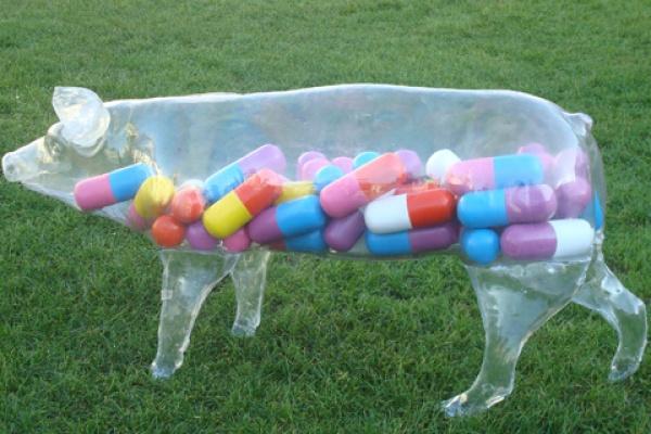 Антибиотики - лекарство, но не еда для воронежцев