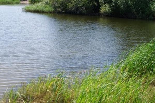 В Воронежской области пруд сдали в аренду как сельскохозяйственный участок
