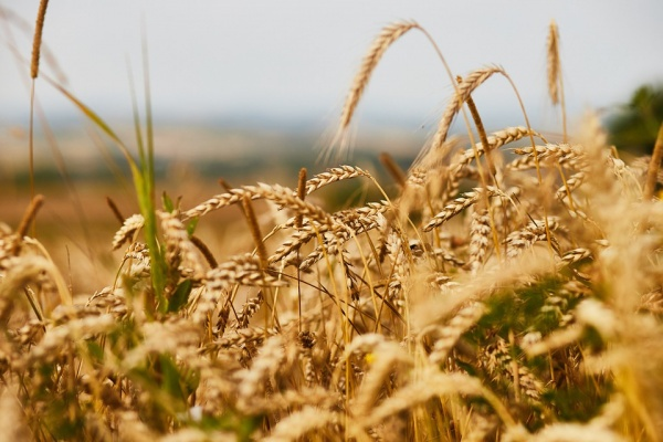 Воронежская область привлекла 51,1 млрд рублей на развитие сельского хозяйства