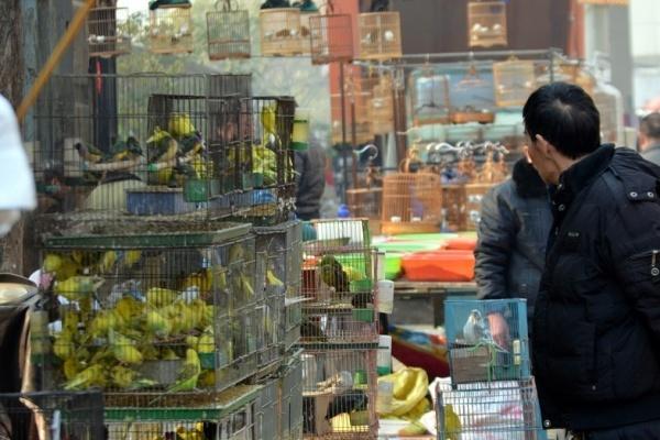 Судьба воронежского птичьего рынка под вопросом