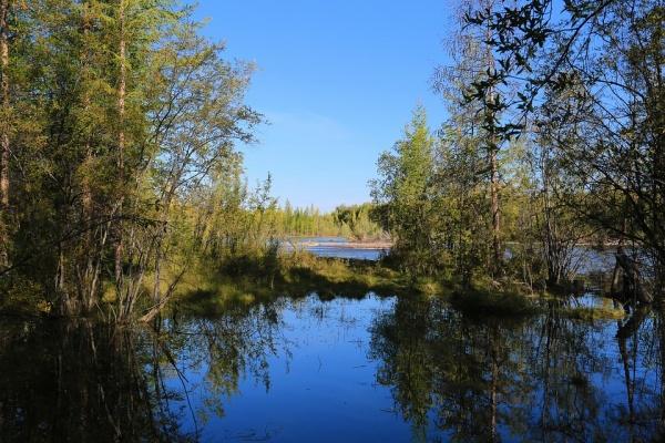 Проект экологической реабилитации реки Воронеж обойдется в 16,8 млн рублей