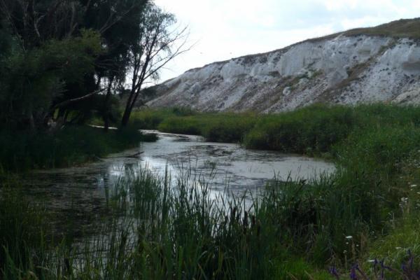 Компания из Белгорода расчистит 3,7 км русла реки Подгорная в Воронежской области