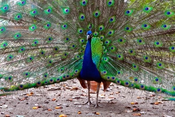 Павловск готов поделиться с Воронежем птицами