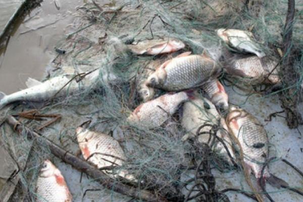 Под Воронежем на рыбоохрану заступили чиновники  местной администрации