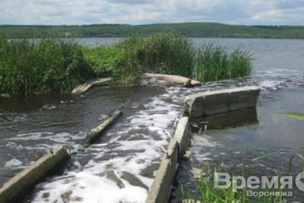 В Воронежское водохранилище запустят растительноядных рыб