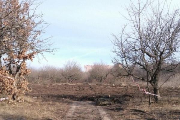 В Воронеже сделан выбор: дома вместо яблоневого сада