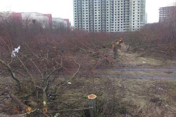 Застройщик вырубил в воронежском яблоневом саду больше деревьев, чем ему разрешили