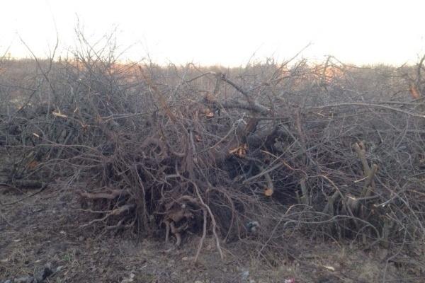 В Воронеже возбуждено уголовное дело по факту хищения яблоневого сада