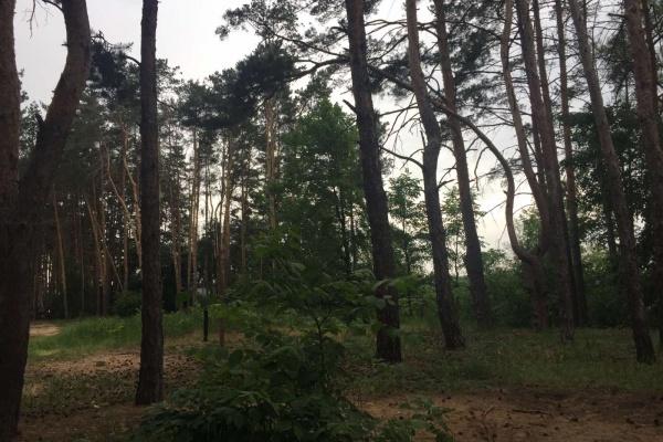 Северный лес в Воронеже запланировали благоустроить к середине 2023 года