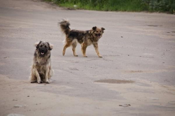 Собачий приют построят на Левом берегу Воронежа