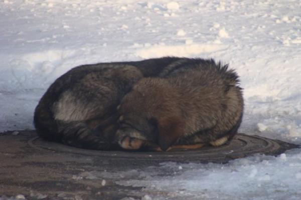 Воронежцы всё чаще страдают от бездомных собак
