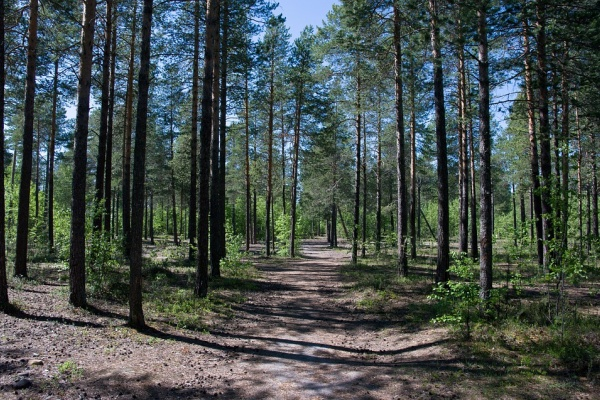 Управление лесхоза отредактировало карту воронежского «зеленого пояса»