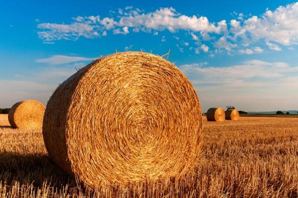 Воронежских аграриев поддержат на 7,7 млрд рублей