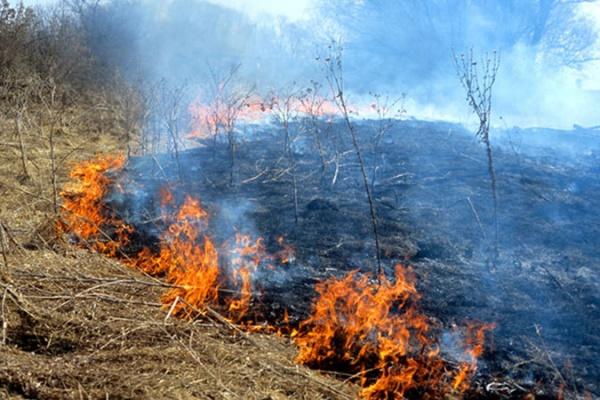Воронежские  стихии: и огонь, и полымя