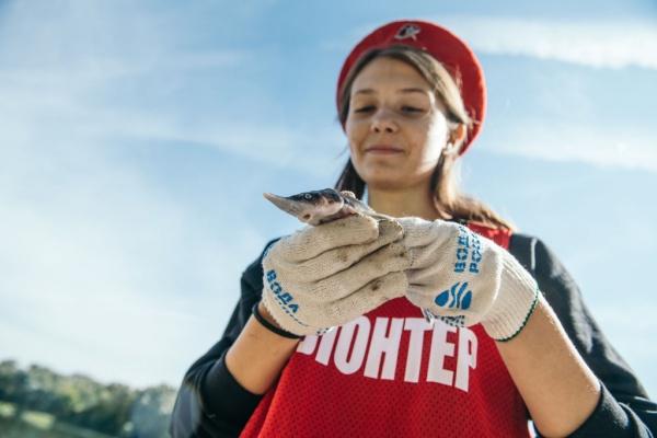 В реку Дон в Воронежской области выпустили 10 тыс. мальков стерляди