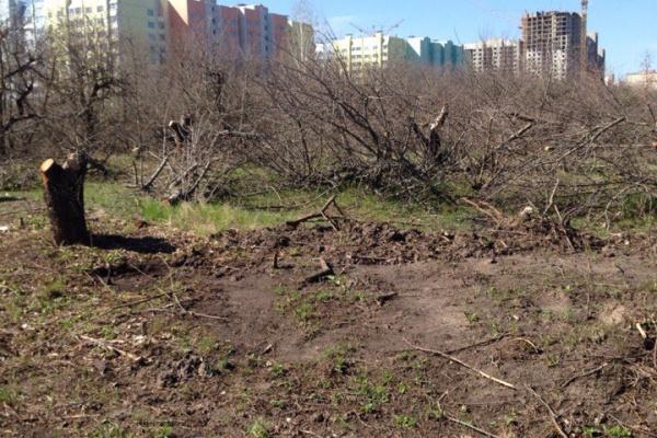 Воронежцы опасаются, что «Выбору» сойдет с рук застройка яблоневого сада