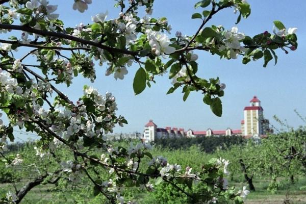Воронежской прокуратуре удалось отстоять право госсобственности на яблоневые сады