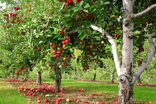 Следственное управление арестовало воронежский «Яблоневый сад»