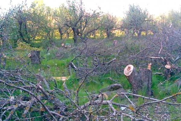 На землях воронежского яблоневого сада уже есть капитальные объекты
