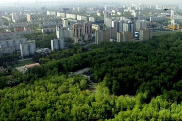В Воронеже продолжается разбирательство с яблоневым садом