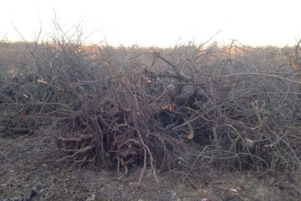 Дело о воронежских яблоневых садах дошло до суда