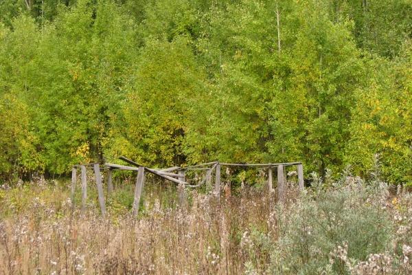 Сахзавод под Воронежем оштрафован за выращивание  берез и сосен