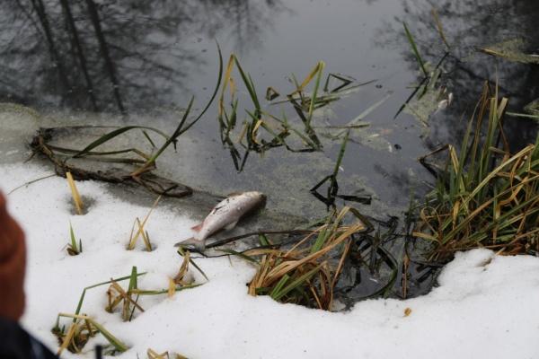 Липецкий водоканал нанес ущерб воронежской реке на 4,1 млн рублей