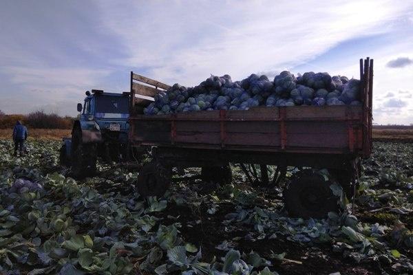 Воронежские зеки на год обеспечили себя овощами