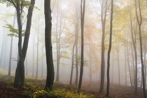 Закон о воронежских лесопарковых поясах рассмотрят на парламентских слушаниях