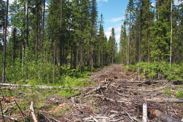 Воронежского губернатора поразила бесхозяйственность в собственной области