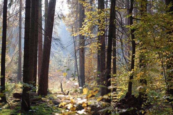 Управление лесхоза отозвало проект воронежского «зеленого пояса»