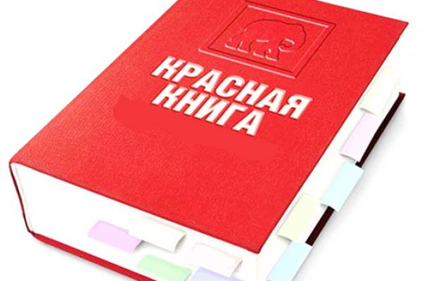 Воронежские прокуроры выступили против продажи краснокнижных животных
