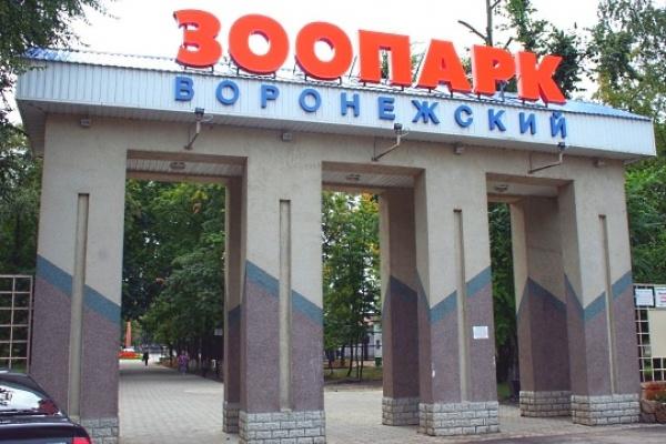 В Воронежском зоопарке обнаружена недостроенная конюшня