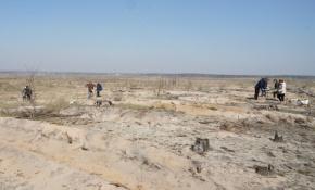 Возвращая Воронежу легкие – заканчивается восстановление лесов после пожаров 2010 года