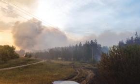 За сутки сгорело 130 га воронежского леса